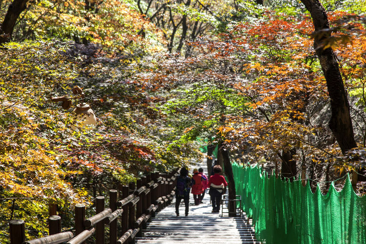 autumn in Maisan Mountain, Jeonju, Jeonbuk, South Korea Autumn Autumn Autumn Colors Beauty In Nature Branch Change Day Fall Full Length Growth Leaf Maisan Men Mountain Nature Outdoors People Real People Tree Tree Trunk Walking Walkway Women