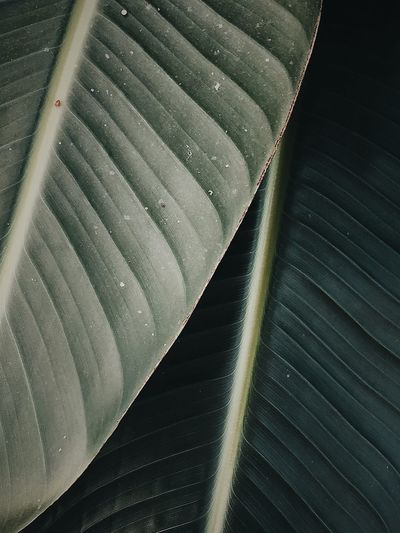 Close-up No People Leaf Full Frame Plant Part Pattern Nature Green Color Backgrounds High Angle View Day Textured  Natural Pattern Beauty In Nature Leaves Drop Sunlight RainDrop Outdoors