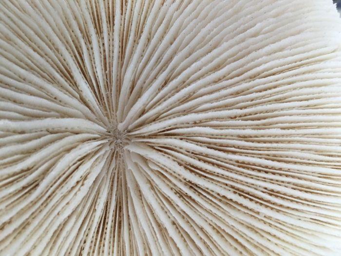 Corals ;3; First Eyeem Photo