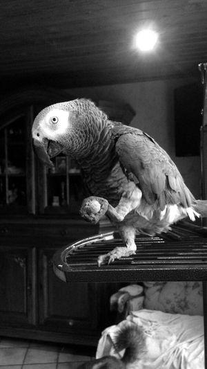Animals Beautiful Peroquet 🐦