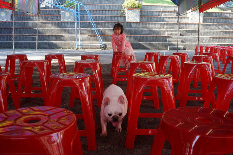 Young man with dog standing on chairs
