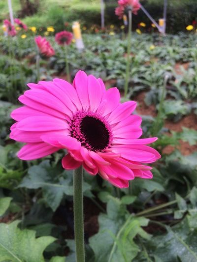Flowers Garden Beautiful Nature Blossom Blooming IPhoneography INDONESIA
