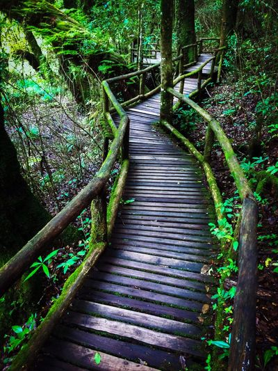Walkingpath Walking Path Walking Way Trail Trekking Trekking #travelling #sightseeing Trekking Nature Love Nature Nature Trail Nature Traveling Nature Travel Travel Photography Forest Forest Path Forestwalk Forest Park Forest Walk