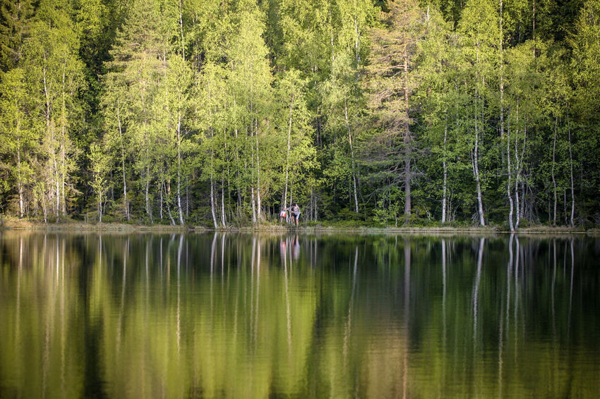 Trees reflected in the still water of a lake Beauty In Nature Day Forest Green Color Growth Idyllic Lake Nature Outdoors Reflection Scenics Standing Water Tranquil Scene Tranquility Tree Water Waterfront