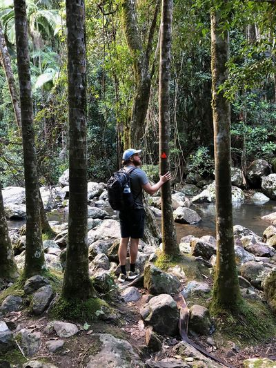Traveler in Rainforest Trees Water Creek Activity Backpack Bushwalk Day Forest Forestwalk Full Length Growth Hiking Land Leisure Activity Lifestyles Nature One Person Outdoors Plant Real People Rear View Traveler Tree Tree Trunk Trunk WoodLand