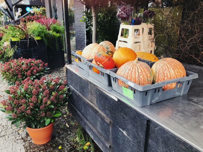Pumpkins on potted plant