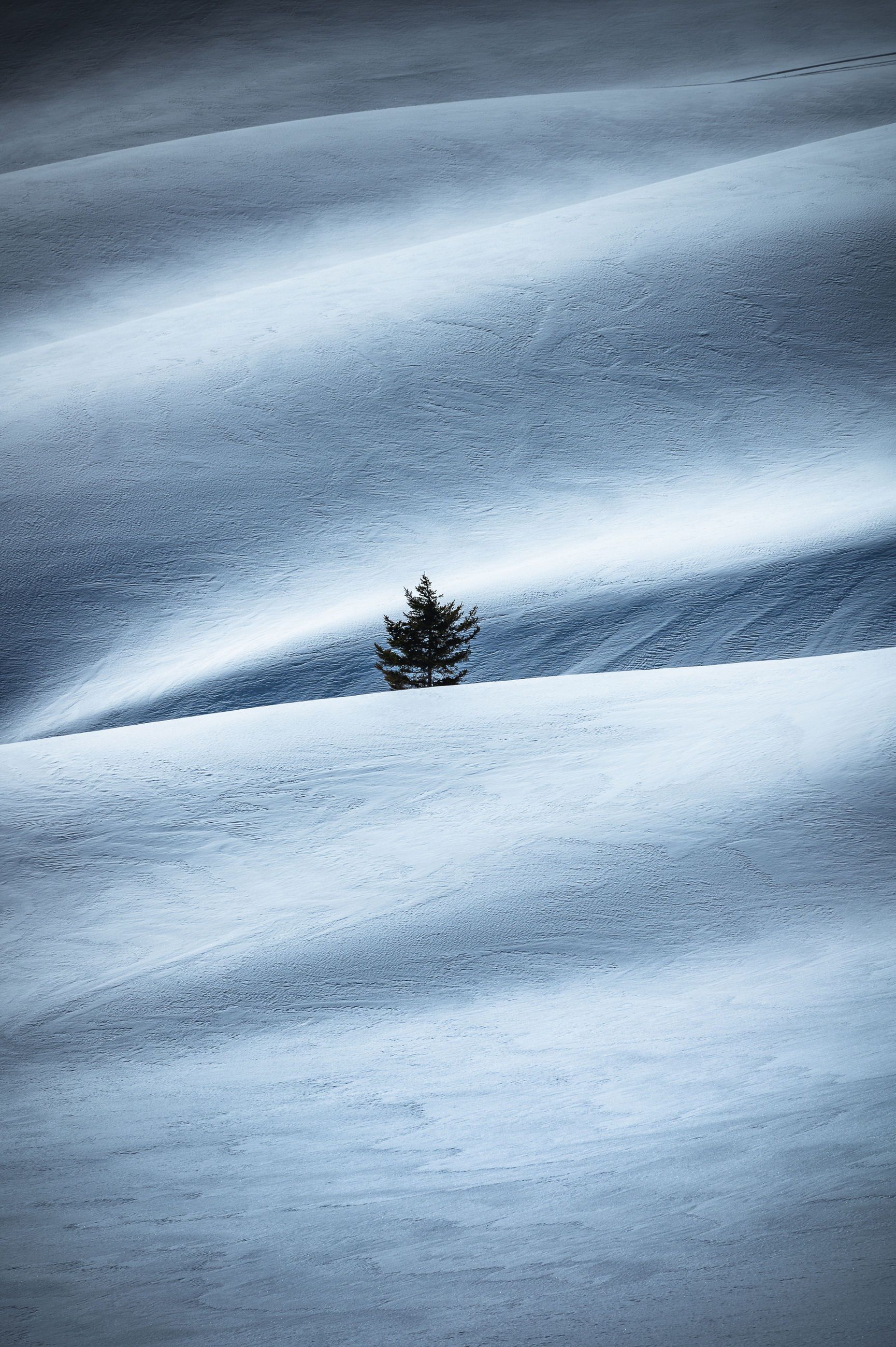 tree, tranquility, scenics - nature, winter, plant, snow, land, beauty in nature, nature, cold temperature, tranquil scene, no people, environment, landscape, day, non-urban scene, field, sky, outdoors, climate