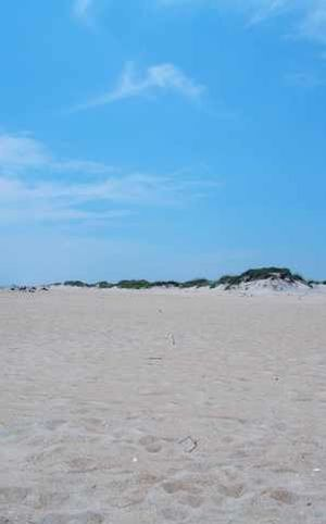 Coastal Carolina Beach Time Salt Life Saturday Sun