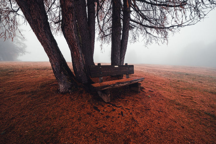 Bench on tree trunk during foggy weather