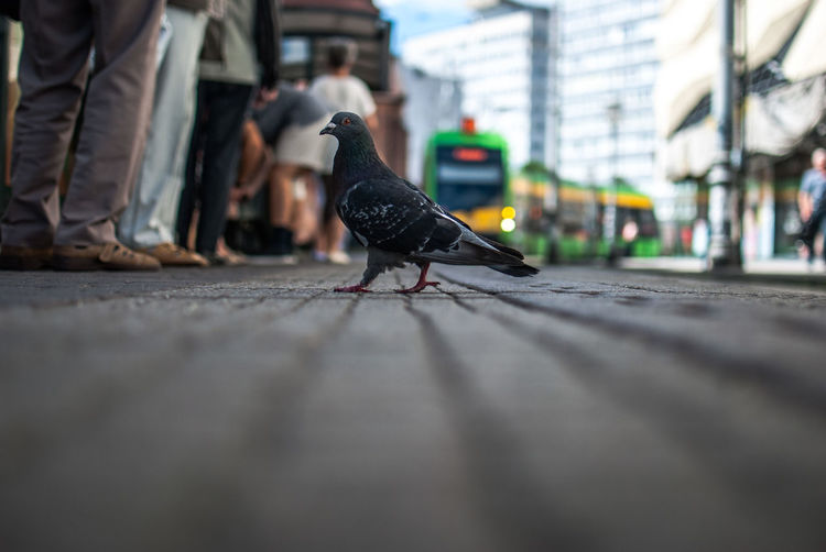 Low section of bird perching on street