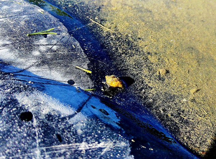 Snail Puddle Water Edge Snail Water Edge Sunshine Day