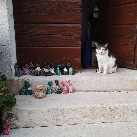 Cat Gift Guard Steetphotography Door