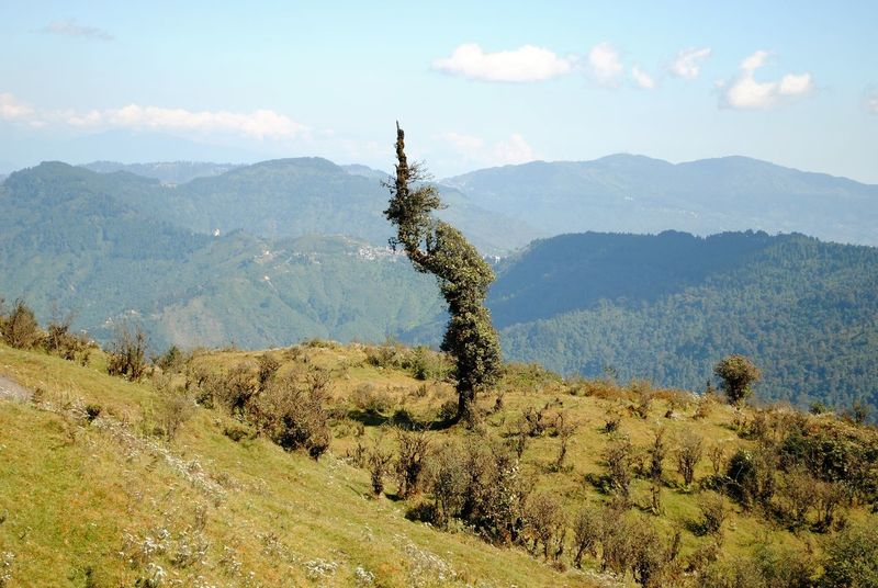 Cloud And Sky Landscapes Nature Lover On The Way To Sandakphu Beauty In Nature Nature Tree