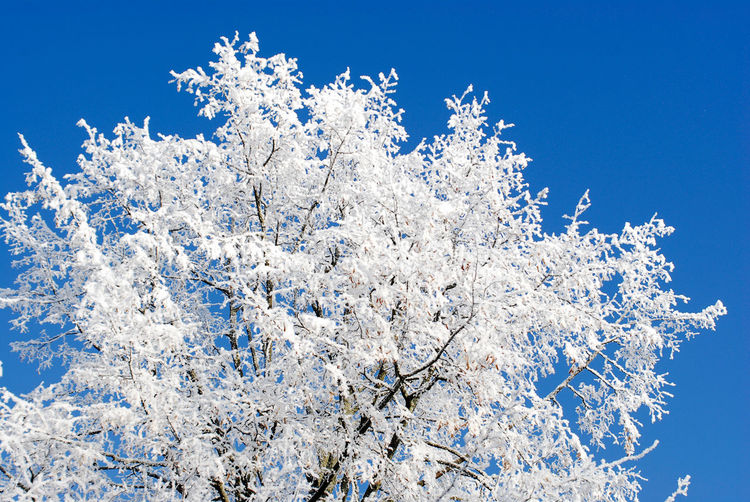 Minsk, Loshica Park Frozen Snow ❄ Winter Beauty In Nature Clear Sky Cold Temperature Nature Snow Tree