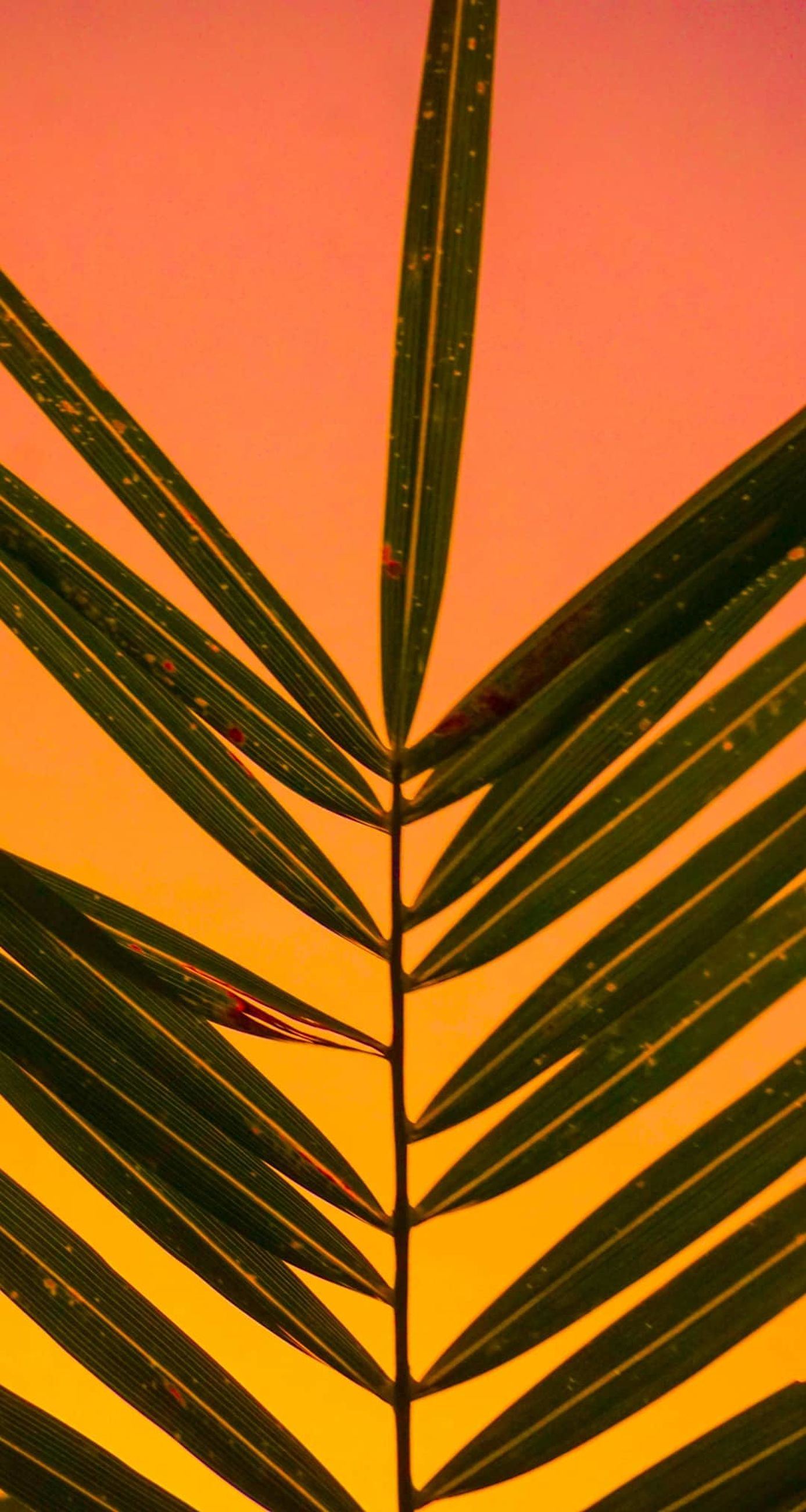 leaf, plant part, close-up, no people, plant, growth, palm tree, palm leaf, colored background, nature, studio shot, backgrounds, outdoors, beauty in nature, tropical climate, yellow, pattern, full frame, single object, orange background