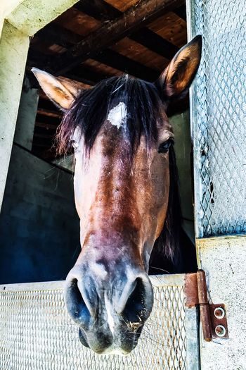 Pet Portraits Domestic Animals Horse Portrait