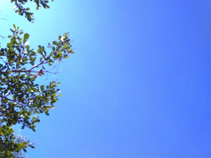 blue sky and trees Blue Sky Blue Sky And Trees Tree Clear Sky Branch Flower Blue Springtime Sky Close-up