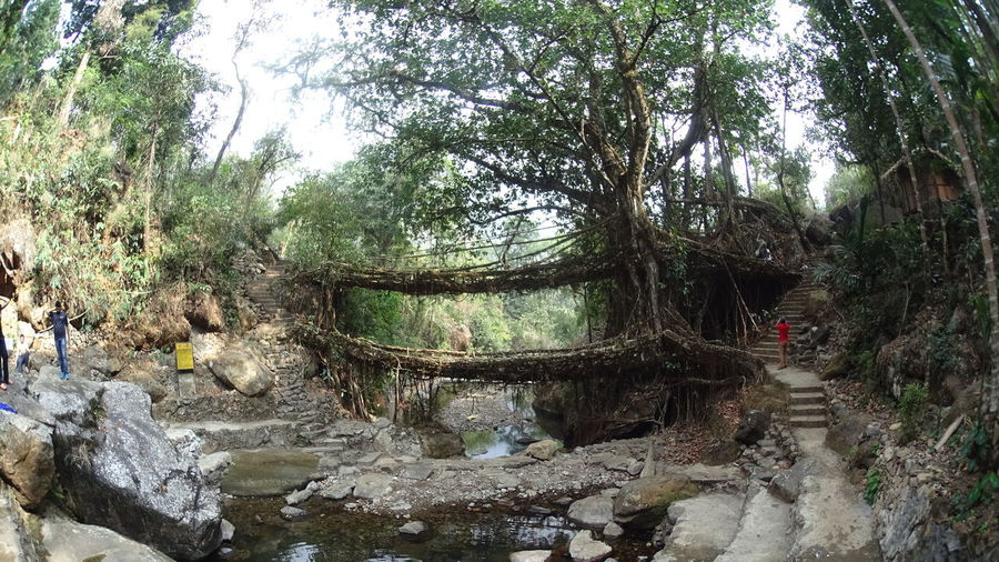 Double Decker Bridge Forest India Natural Bridge  Nature Rural Tourism Traveling