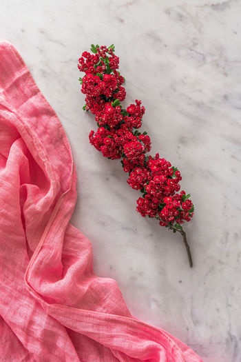 High angle view of red flowering plant