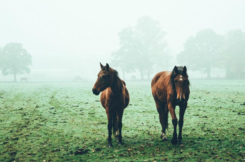 Horses Standing On Grassy Field