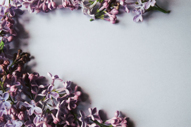 Beauty In Nature Close-up Copy Space Flower Flower Head Flowering Plant Fragility Freshness Growth High Angle View Inflorescence Interior Lilac Nature No People Petal Picture Postcard Pink Color Plant Purple Springtime Vulnerability  Wallpaper
