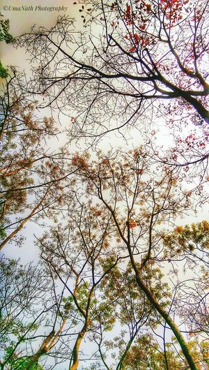 Shades of Winter Eyeem Shades Of Winter Backgrounds Full Frame Low Angle View Nature Day Beauty In Nature No People Growth Fragility Outdoors Sky Flower Branch Tree Close-up