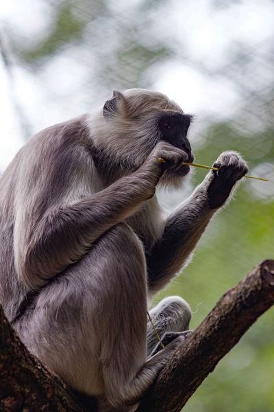 Monkey Business A Day At The Zoo Animal Themes Animals In The Wild Animal Mammal Animal Wildlife One Animal Tree Monkey Primate Ape