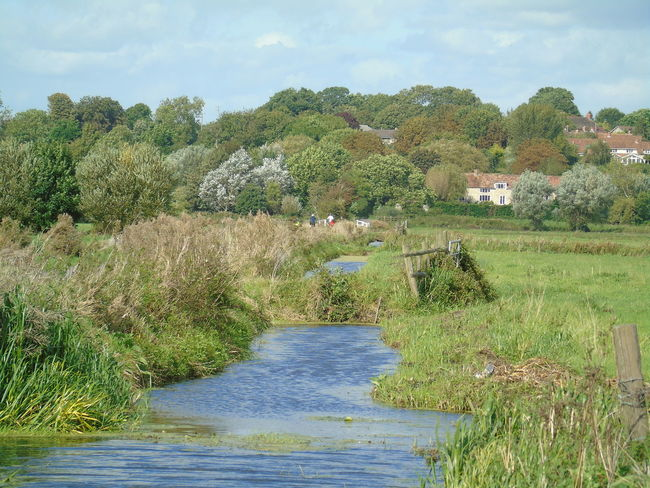 Water Tree Tranquil Scene Grass Non-urban Scene Beauty In Nature Cloud - Sky Green Color Stream Sky Field Nature Nature On Your Doorstep Somerset Levels Uk In All Its Glory Nature