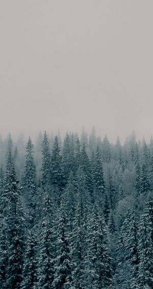 winter haze Tree Snow Cold Temperature Winter Forest Fog Wilderness Area Mountain Pine Tree Snowing Spruce Tree Pine Woodland Fir Tree Glade Pine Wood Coniferous Tree Birch Tree Pinaceae Forest Fire Frozen Water Needle - Plant Part Freshwater Deep Snow Evergreen Tree Snowdrift Frost Treetop Frozen Polar Climate