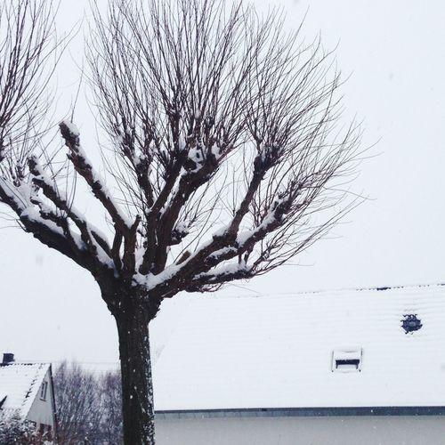 Deepfreeze tree 1.0