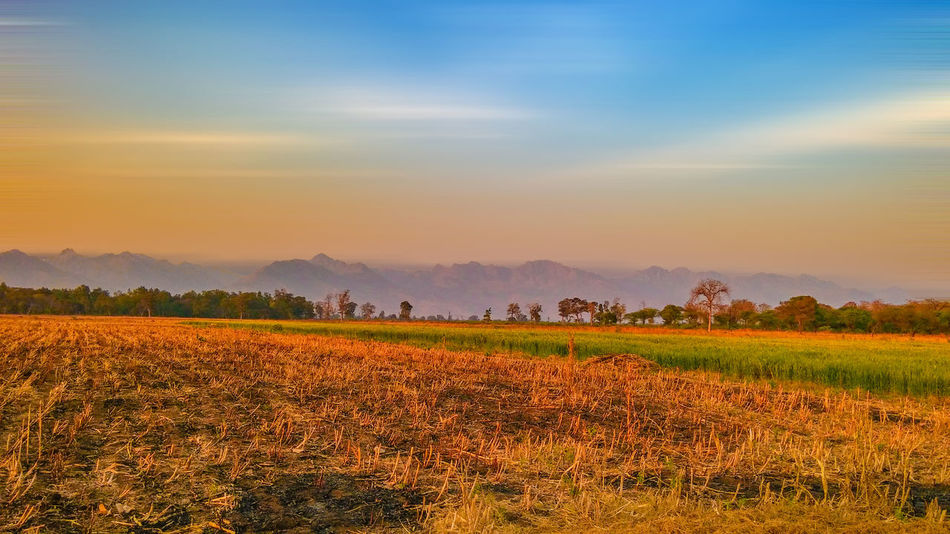 Scenic view of field against sky during sunset Agriculture Beauty Beauty In Nature Cloud - Sky Day Field Food Galaxy Landscape Mountain Nature No People Outdoors Scenics Sky Social Issues Sunset