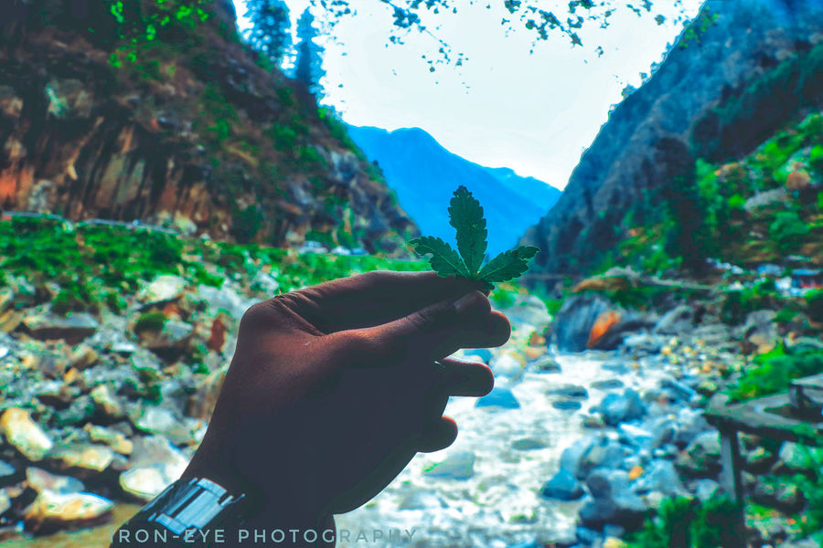 Human Hand Human Body Part Mountain One Person Adults Only People Adult Outdoors Nature Sky Tree Day Only Men One Man Only Ironeyephotography Beautiful Focus On Foreground Beauty In Nature Zen-like Scenics Marijuana 420 MaryJane Mountains Greens