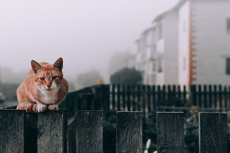 View of a cat looking through fence