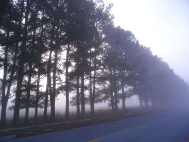 4statepics Arkansas Blindshot Fog_collection Foggy Morning Outdoors Scenics Sky The Way Forward Tranquil Scene Tree
