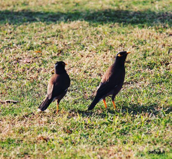 Riyadh Bird Animals In The Wild Perching Raven - Bird Day No People Blackbird KSA Photo Photography Popular Photos 2017 Safy.a.h جدة Jeddah الرياض صوره عدستي قروب مصورين العرب Beach
