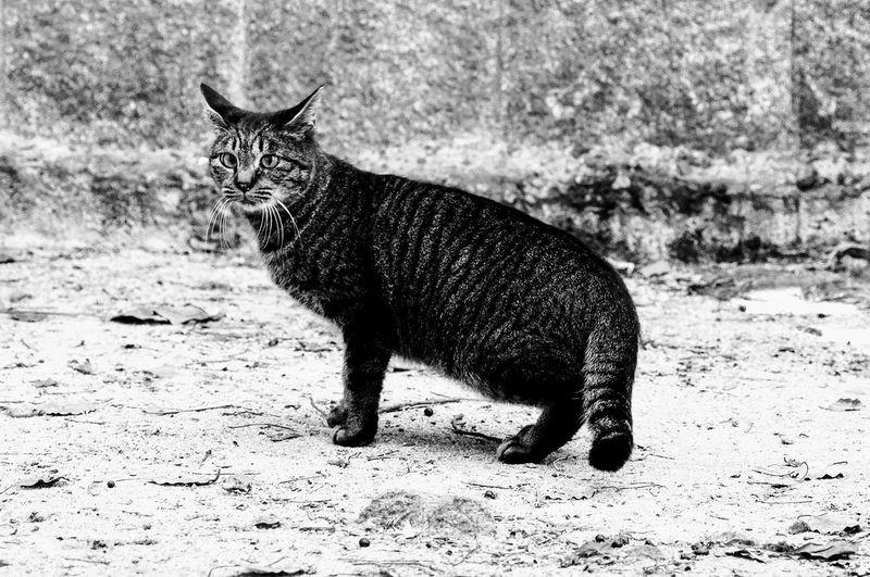 神社にいたネコ Cat