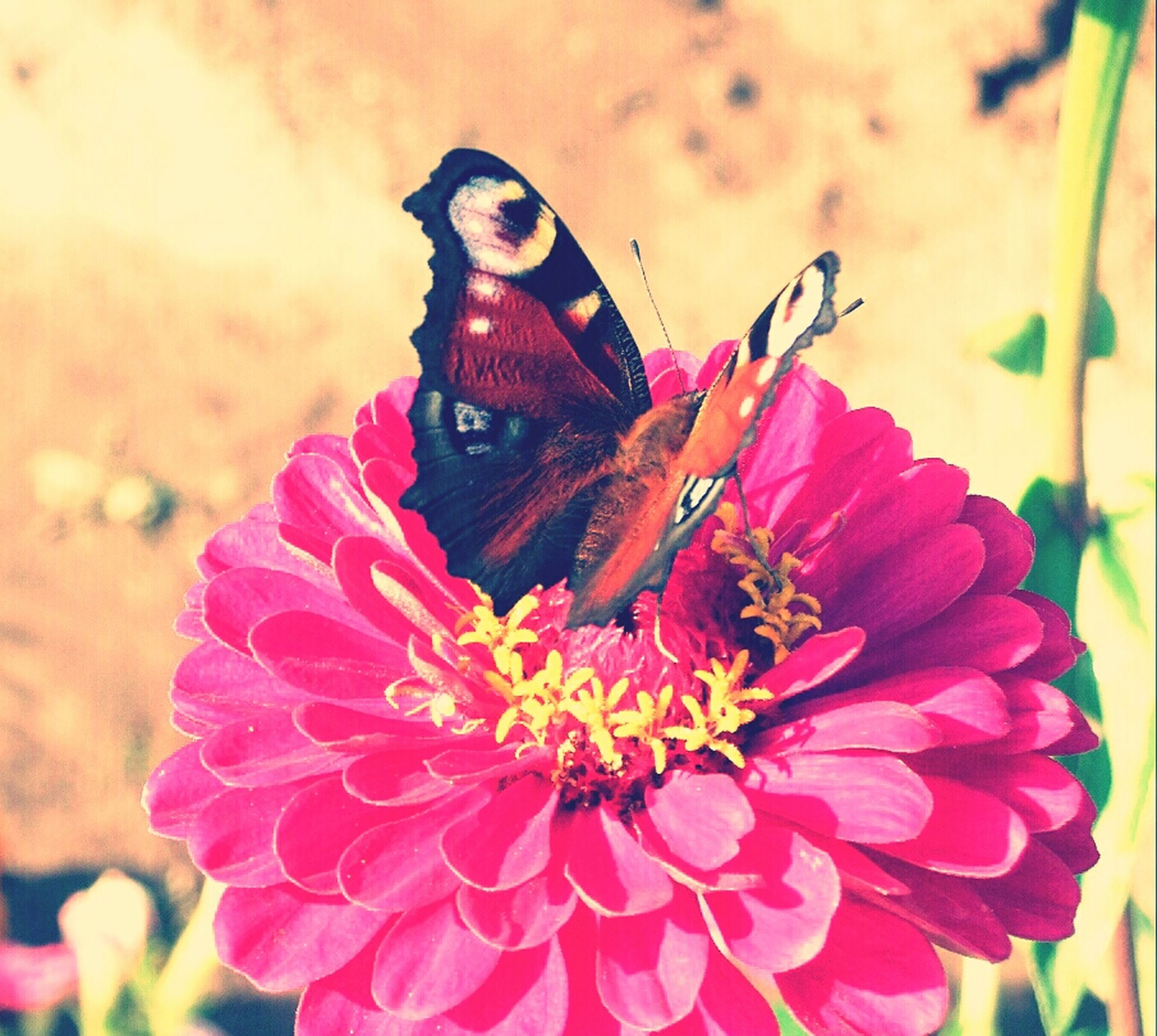 flower, petal, focus on foreground, close-up, fragility, flower head, insect, freshness, beauty in nature, one animal, animals in the wild, animal themes, pink color, nature, wildlife, growth, blooming, plant, outdoors, day