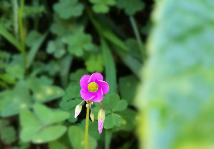 Flower Nature Fragility Pink Color Plant Beauty In Nature Petal Green Color Beauty In Nature Colorful Photography Illuminated