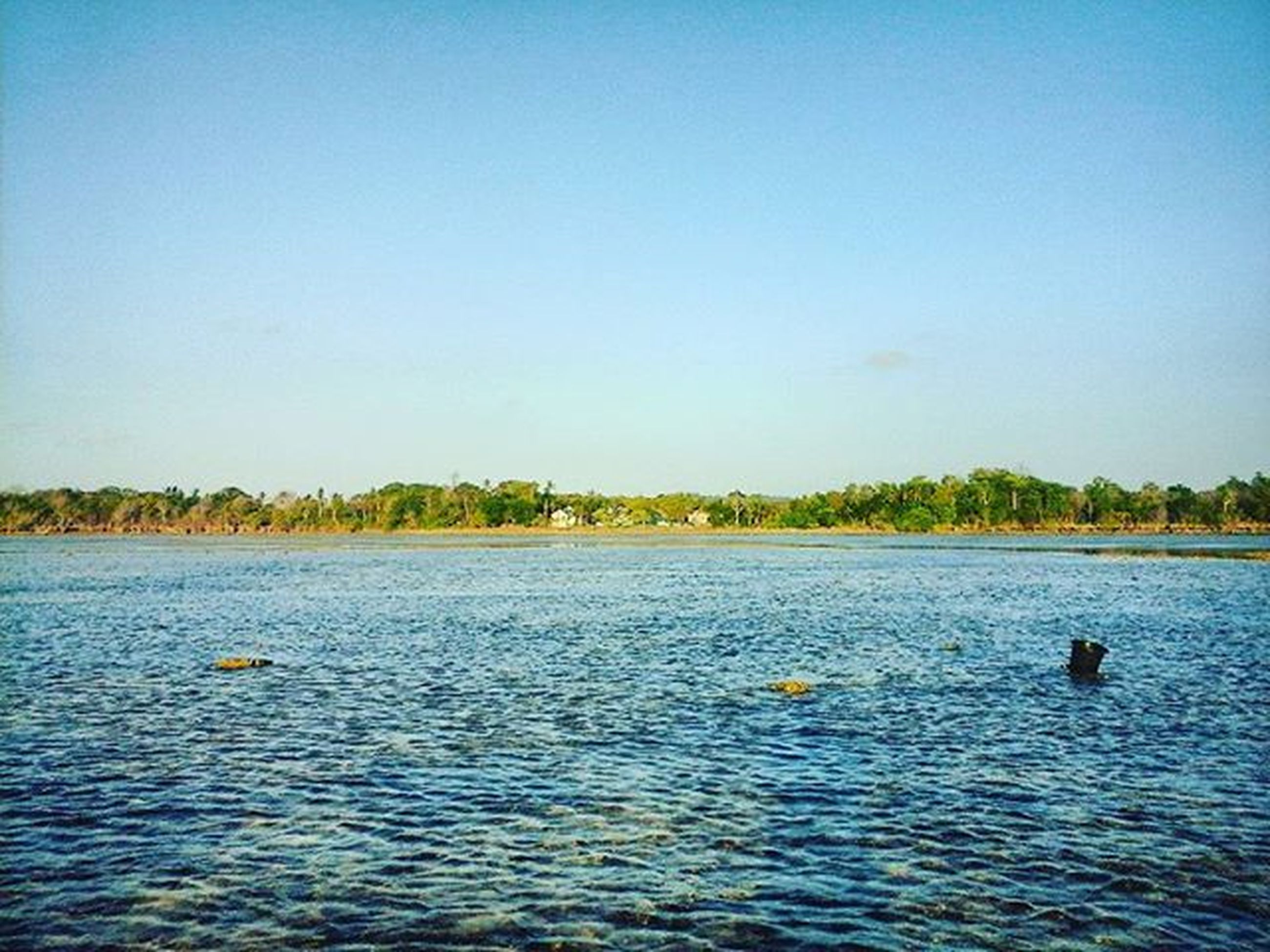 water, clear sky, waterfront, animal themes, copy space, lake, blue, tranquil scene, tranquility, bird, animals in the wild, wildlife, rippled, scenics, nature, beauty in nature, swimming, tree, river, duck