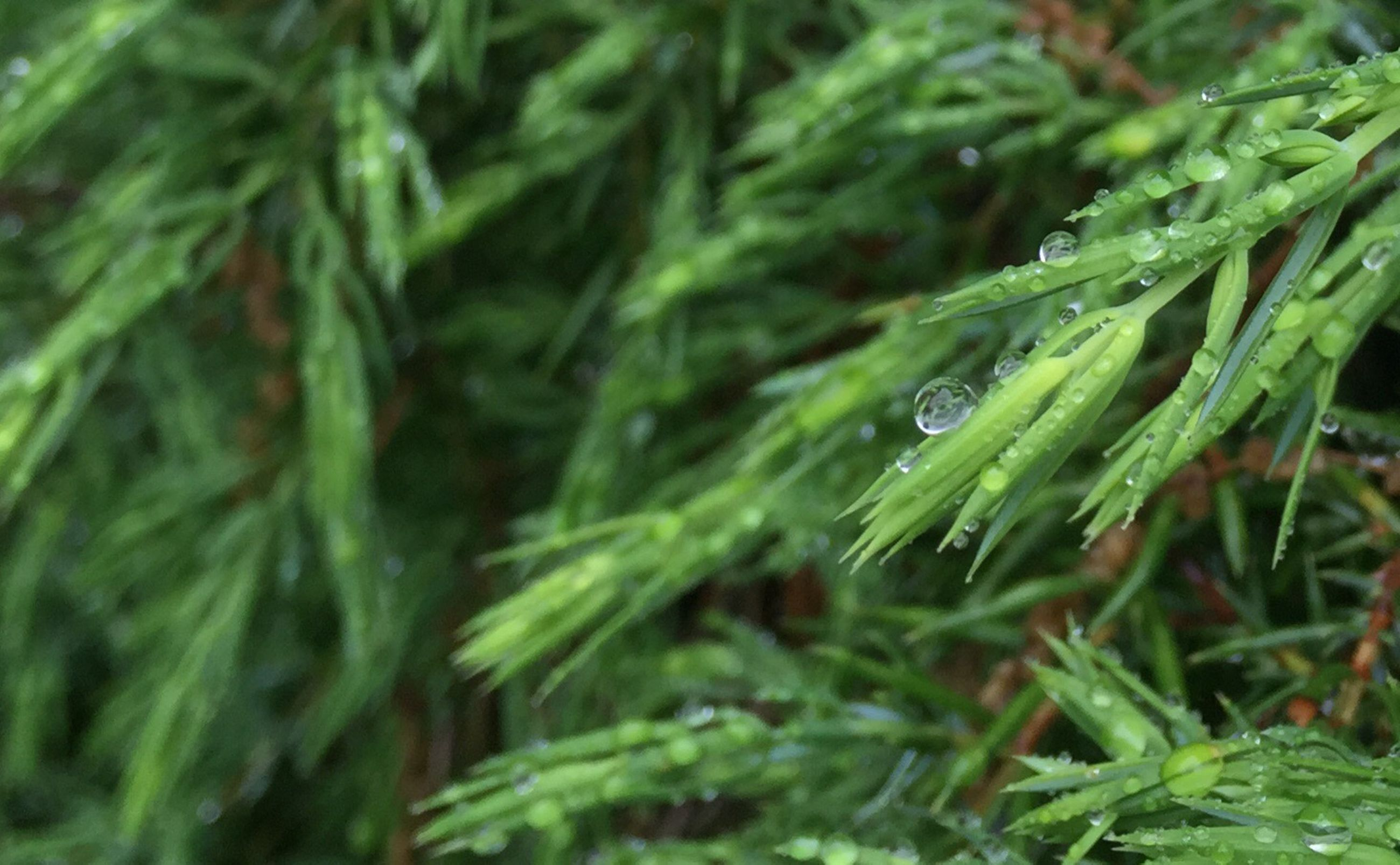 green color, growth, close-up, leaf, nature, plant, freshness, full frame, drop, selective focus, backgrounds, wet, beauty in nature, green, water, no people, focus on foreground, grass, day, blade of grass