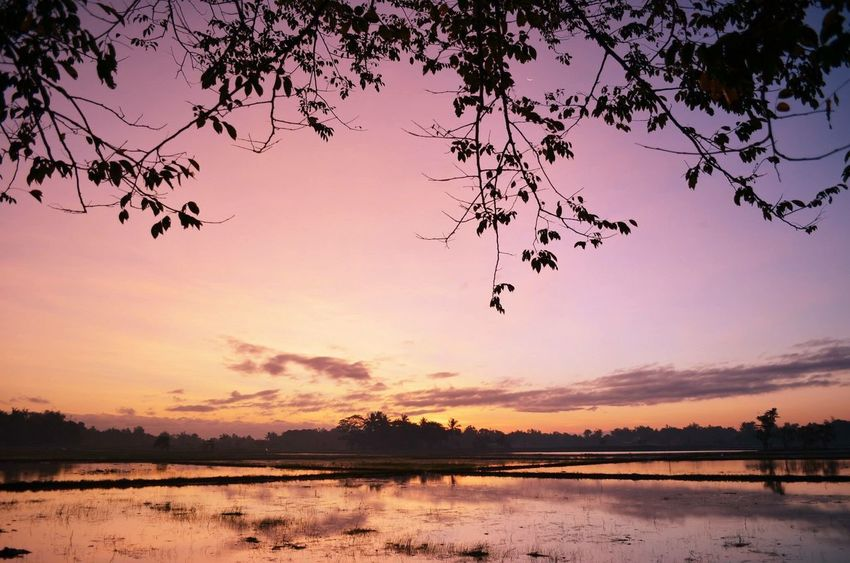 Sunrise Sunrise_Collection Malolos Rice Field Colorful Sunrise