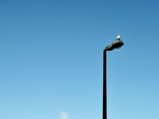 On the lookout. Bird Photography Animals Blue Sky Upintheair Seagulls Curious Simplicity Eyeemphotography EyeEm Best Shots EyeEm Nature Lover The Week On Eyem