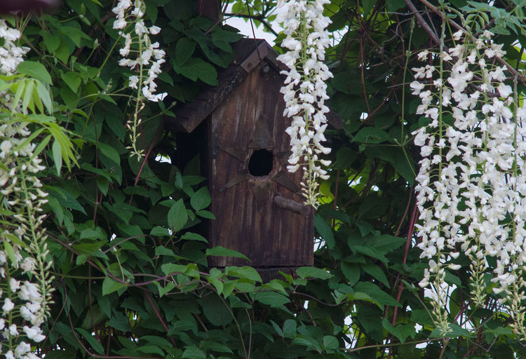Low angle view of birdhouse on tree