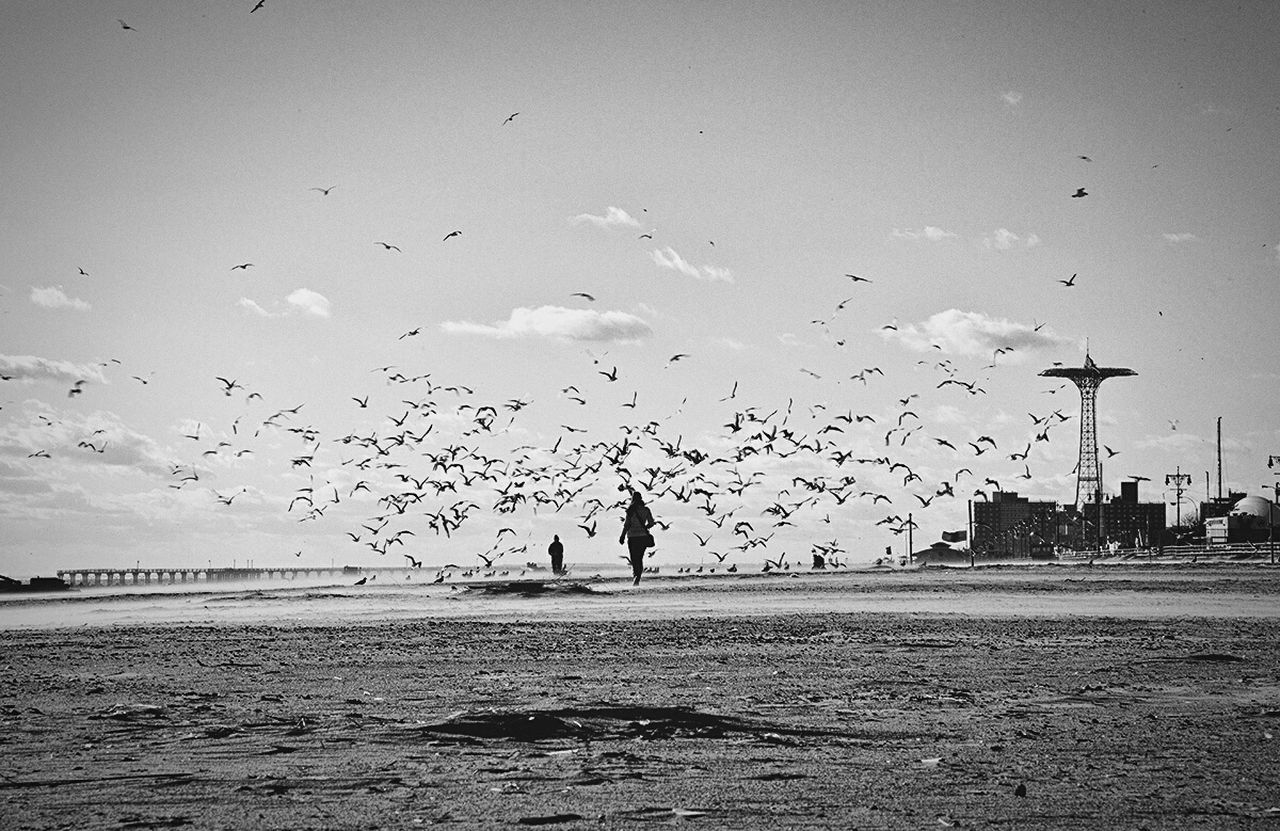 large group of animals, bird, flying, flock of birds, sea, silhouette, water, sky, mid-air, animals in the wild, real people, nature, beach, leisure activity, beauty in nature, outdoors, sand, migrating, men, scenics, togetherness, horizon over water, day, people