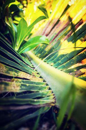 fallen~ Simplicity Palmtree Photography