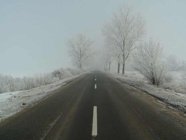 Empty Road Bare Tree Country Road Empty Road Landscape Road Road Marking Road Sign Sky Snow Snowy Road The Way Forward Transportation Tree Winter Winter Road Wintertime