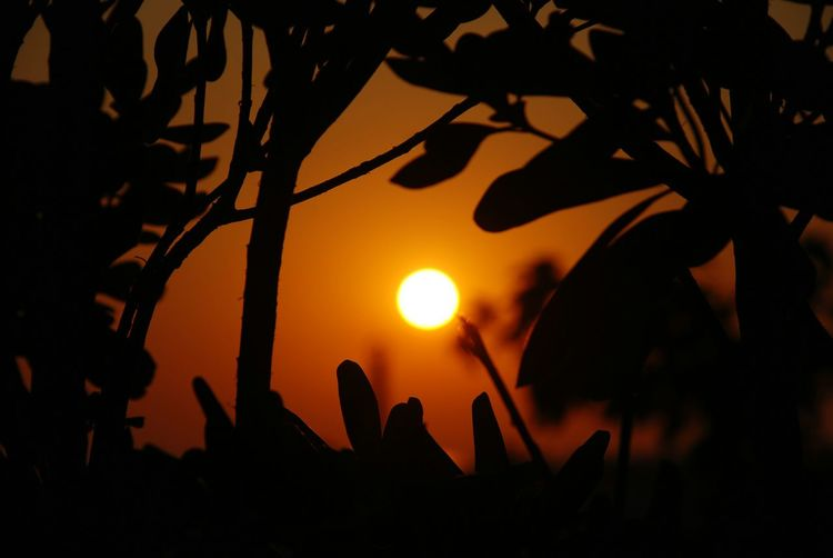 Days in the sun Branches Lights Yellow Summer Camping Campinglife Silhouette Tree Night Plant No People Nature Beauty In Nature Sky Outdoors Orange Color Sunset Scenics - Nature Leaf Tranquility Travel Destinations 10