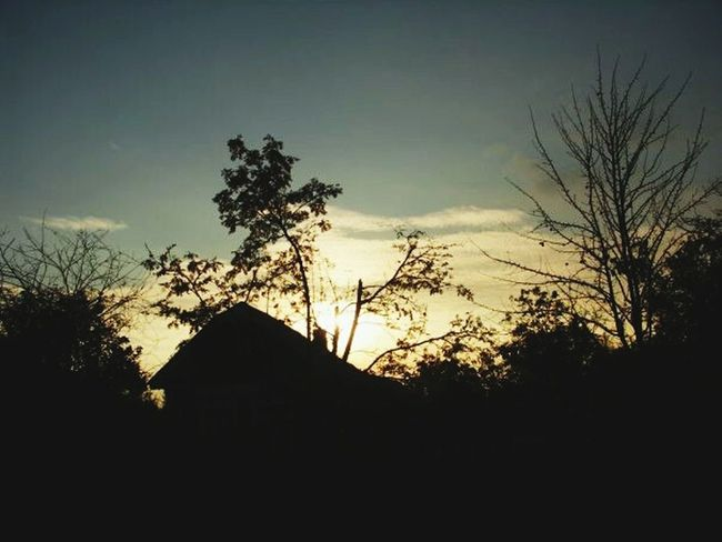 Tree Silhouette No People Built Structure Outdoors Sunset Sky Architecture Nature Day