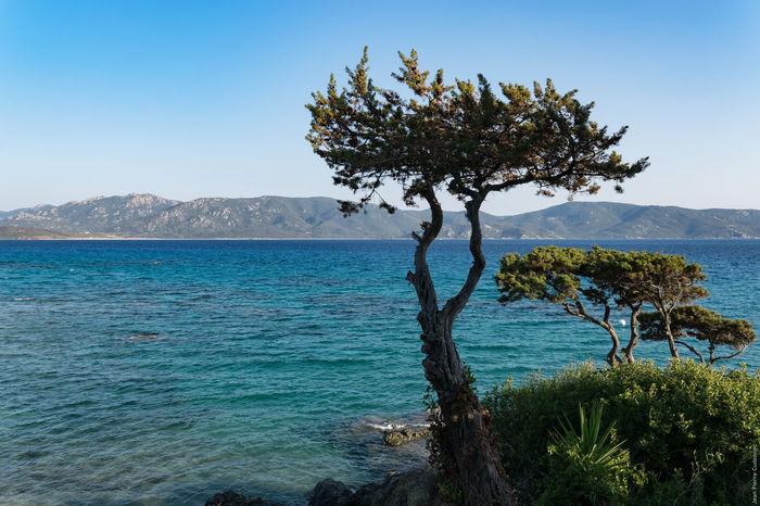 Corse Mediterranean  Beauty In Nature Blue Clear Sky Corsica Day Growth Landscape Mountain Nature No People Outdoors Scenics Sea Sky Tranquil Scene Tranquility Tree Water