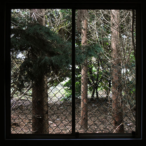 Branch Chainlink Fence Conifers Day Looking Out Nature No People Outdoors Square Windows Tree View From The Window... Woods Perspectives On Nature